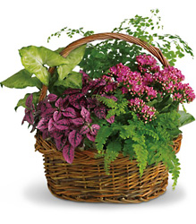 Secret Garden Basket from Schultz Florists, flower delivery in Chicago